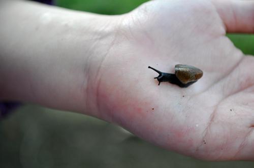 Snail Nola