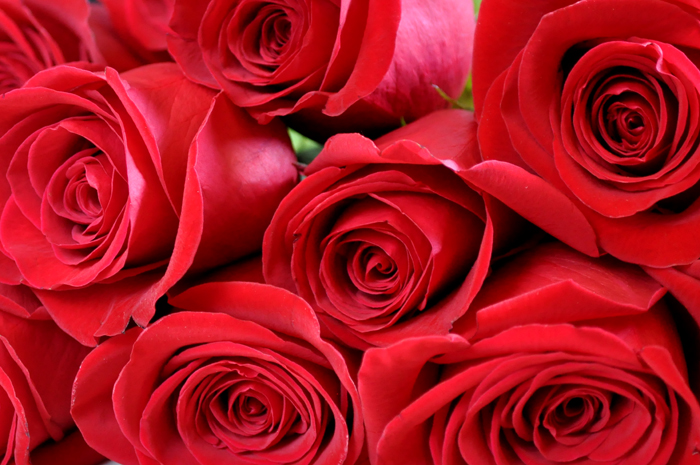 Rose 15 USE