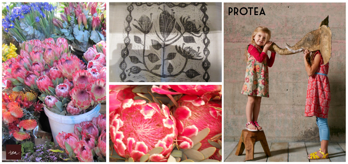 ProteaFlower by Tea Collection