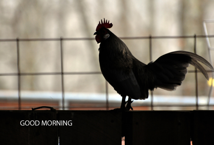 Good Morning by Curly Birds
