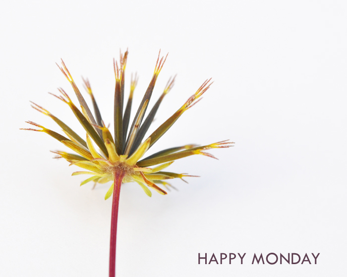 Happy Monday by Curly Birds