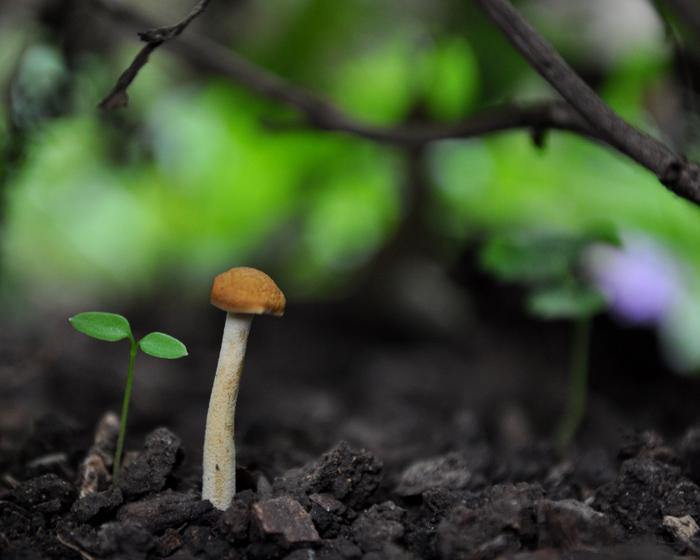 Garden-mushroom